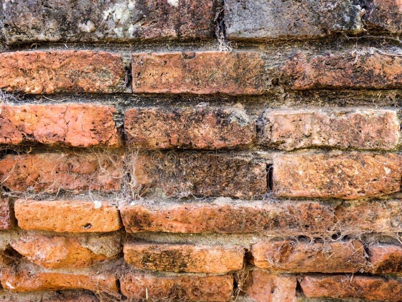 Stara ruina budynku ściana z cegieł tekstura obraz royalty free