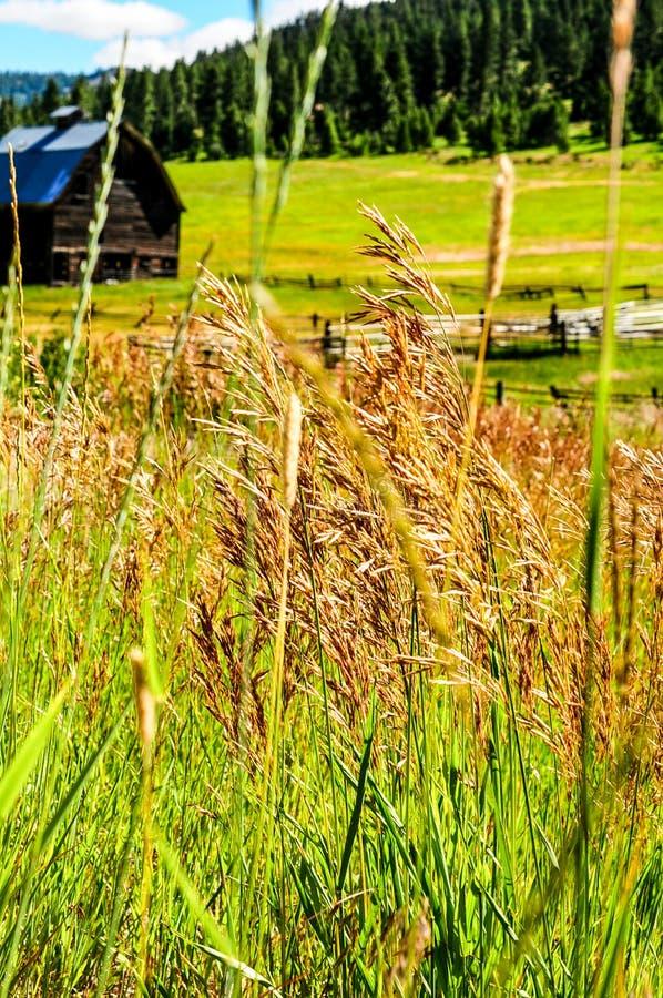 stara stajni łąka zdjęcie stock