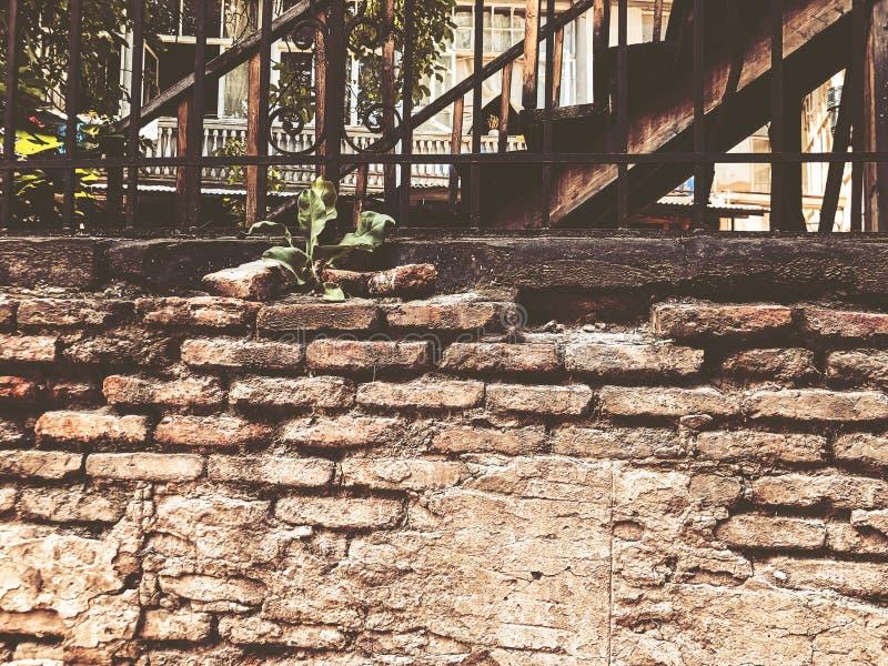 Stara Tbilisi architektura, jard, okno, starzy żelazni schodki i ściana z cegieł w letnim dniu, fotografia royalty free
