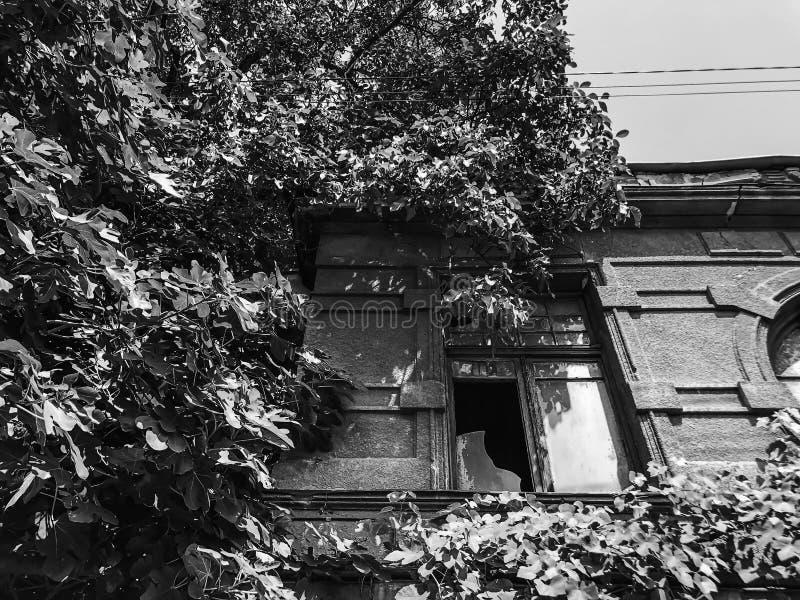 Stara Tbilisi architektura, jard, okno w letnim dniu Ziele? li?cie przeciw staremu budynkowi obraz royalty free