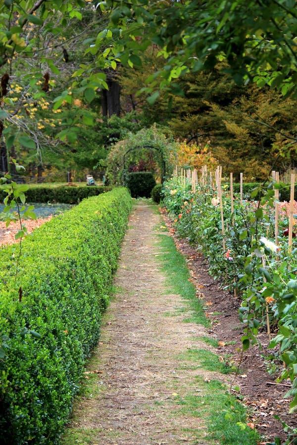 Starannie naszywani krzaki w sezonowym ogródzie obrazy royalty free
