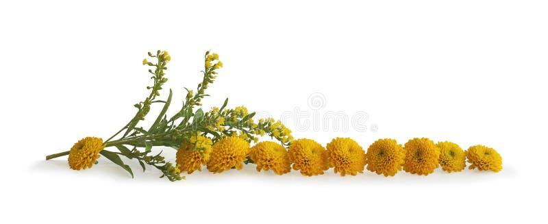 Staranny rząd Żółte kwiat głowy zdjęcia royalty free