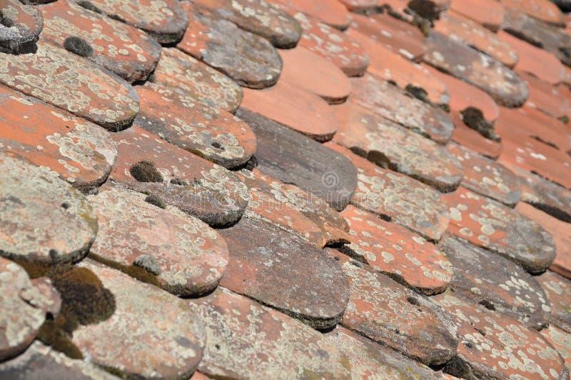 Stare bobra ogonu niecki płytki zdjęcie stock