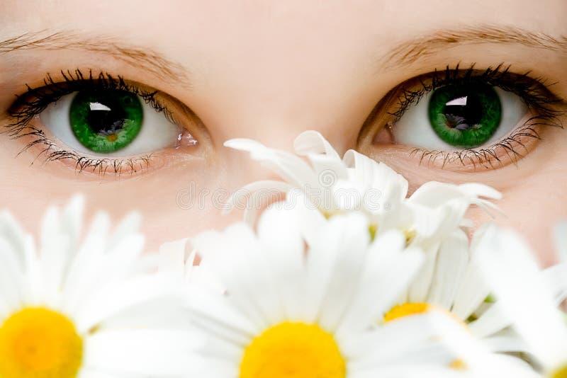 Stare degli occhi verdi delle donne fotografia stock