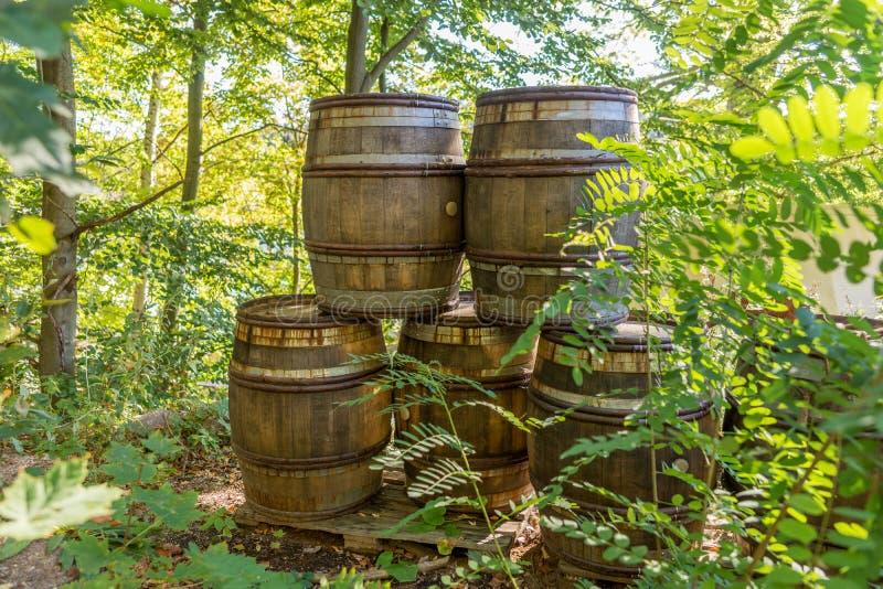 Stare drewniane baryłki w lesie obrazy stock