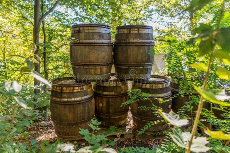Stare drewniane baryłki w lesie zdjęcie royalty free