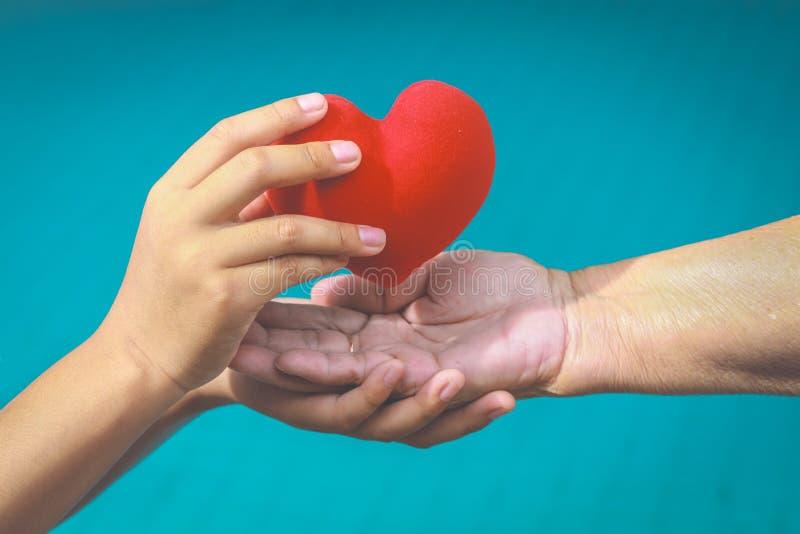Stare i potomstwa ręki trzyma czerwonego serce obrazy royalty free
