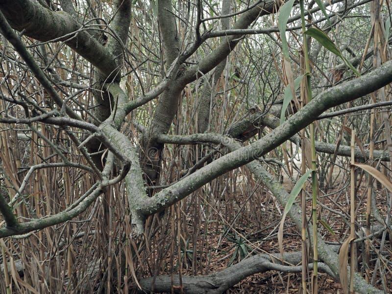 Stare kręcone gałąź i bambusowy abstrakcjonistyczny tło obraz royalty free
