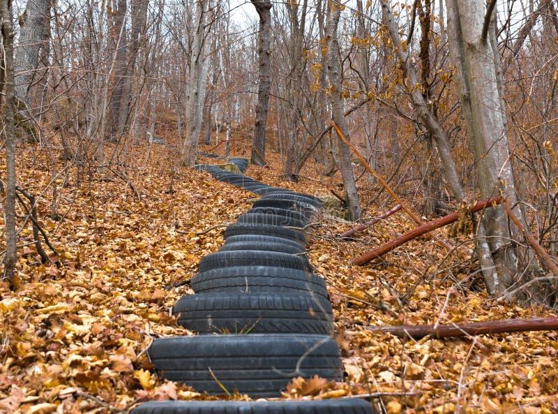 Stare opony robi sposobowi przez jesień lasu obraz royalty free