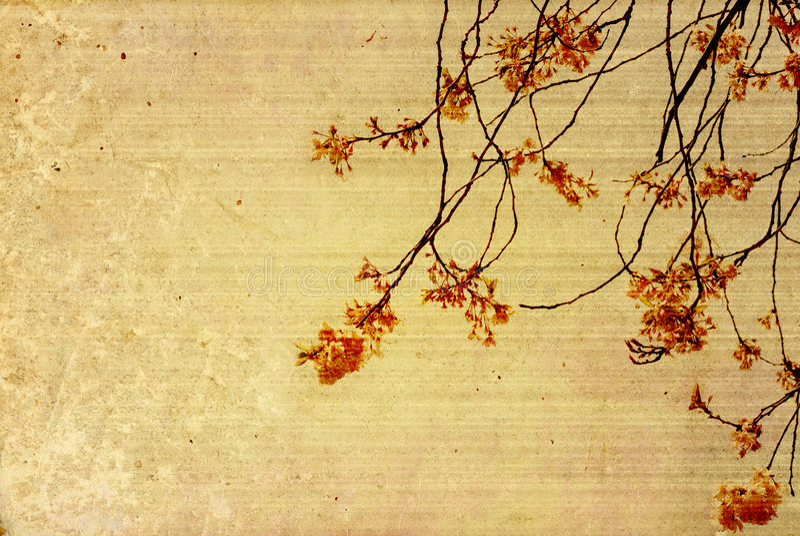 stare papierowe tekstury kwiat zdjęcia royalty free