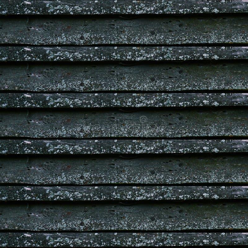 Stare szarość deski Drewniany ogrodzenie zakrywający w grzybach od dampness wzory naturalnych fotografia royalty free