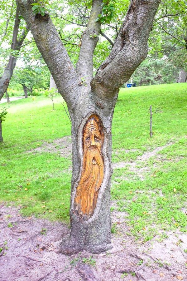 Starego człowieka drzewo fotografia royalty free