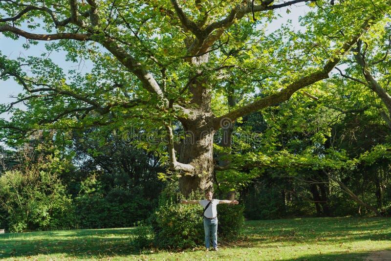 Starego wielkiego płaskiego drzewa lub płaskiego drzewa lat Platanus od Parkowego Vorontsov pałac w Alupka obraz stock