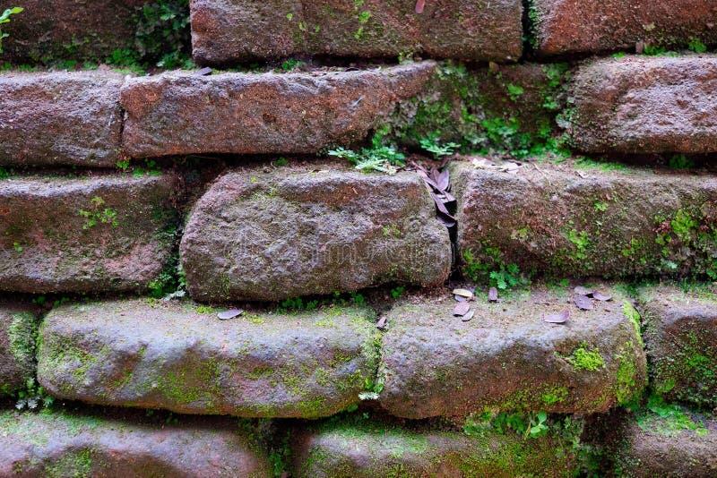 starej mechatej ściana z cegieł tła ruiny Królewscy ogródy, lew Rockowy Sigiriya, przyciągania, Dziejowi miejsca w Sri Lanka zdjęcie stock