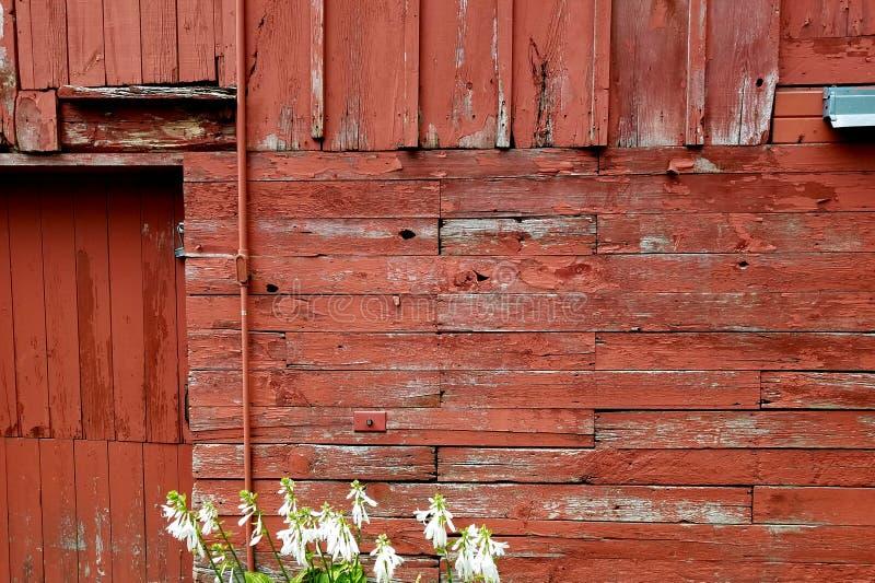 Starej stajni nieociosana drewniana ściana fotografia royalty free