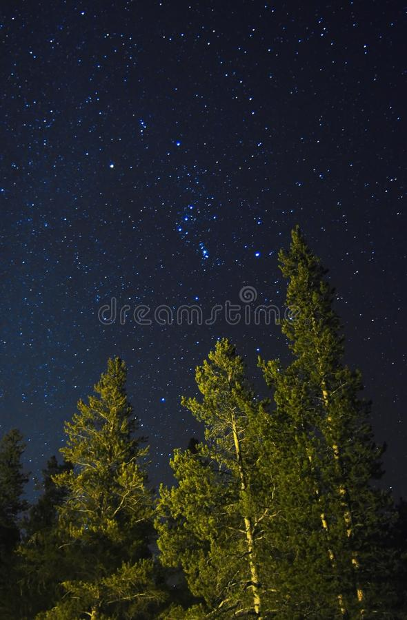 Starfield do sul acima dos pinhos de lodgepole fotos de stock royalty free