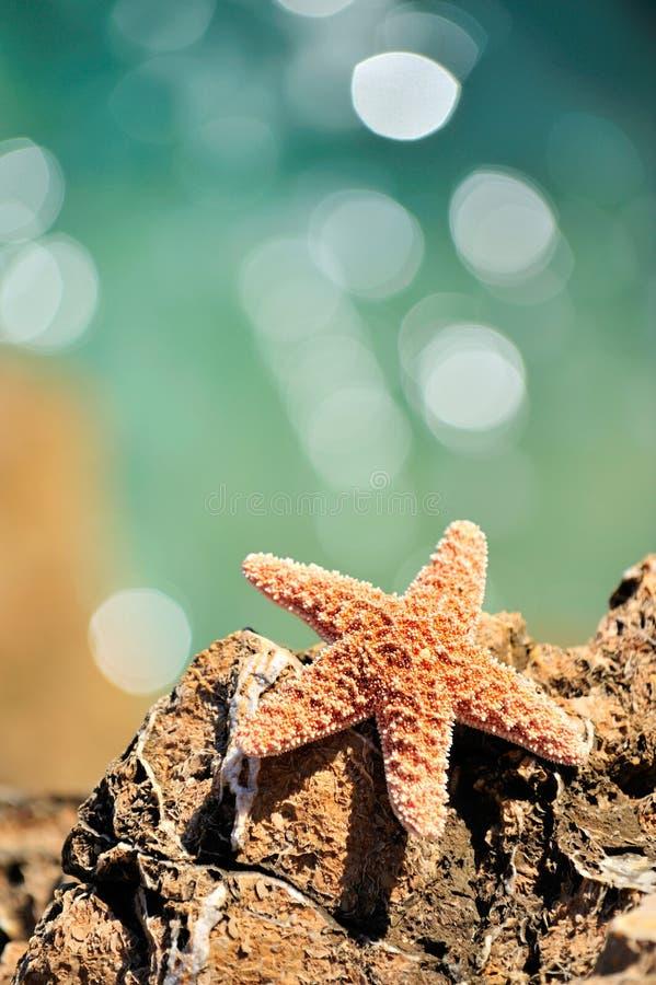 Starfish über Stein stockfotografie