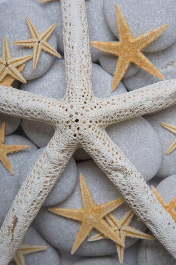 starfish камушка предпосылки стоковые фотографии rf