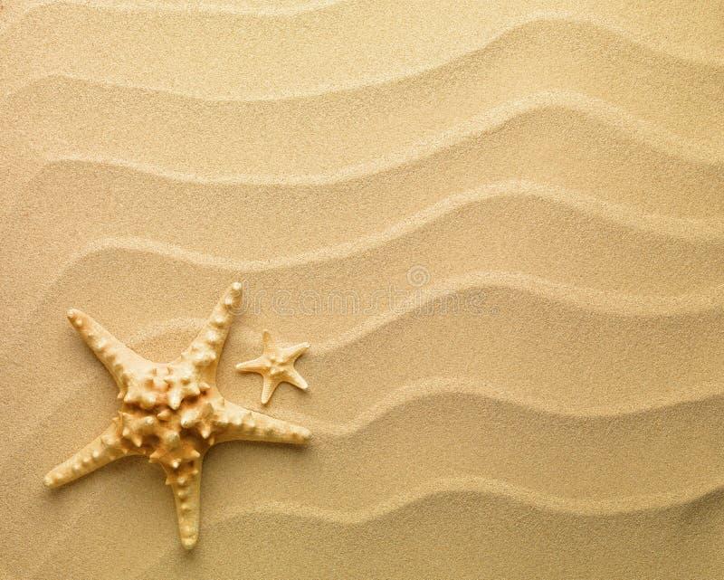 starfish песка стоковые изображения rf