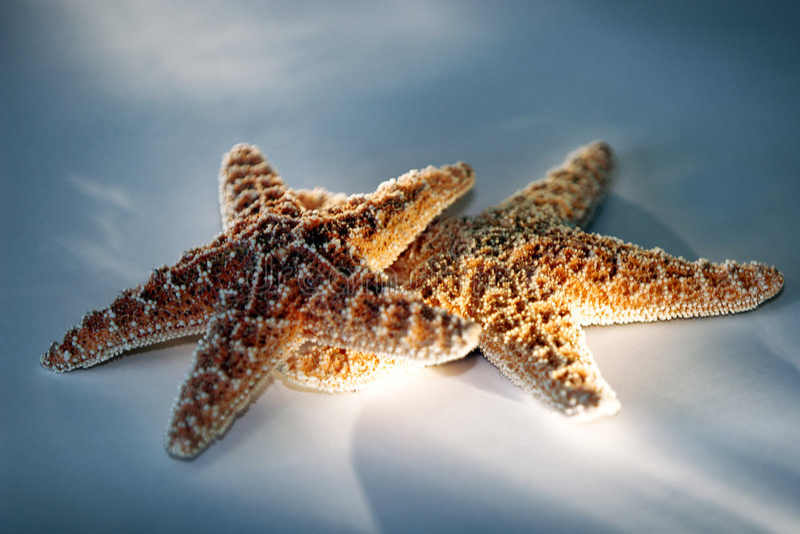 starfish света влияния пар