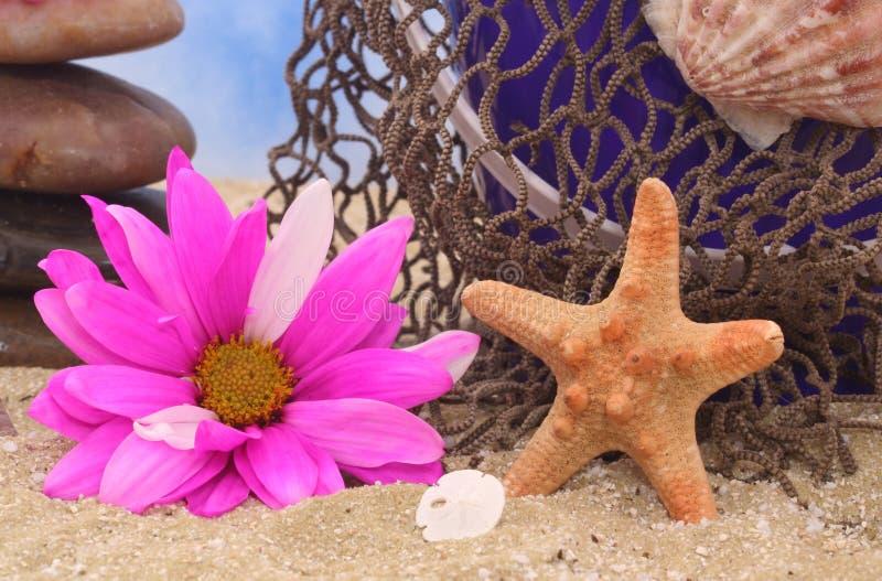 starfish цветка стоковая фотография