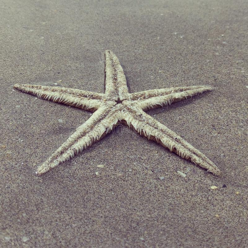 Starfish fotos de stock royalty free