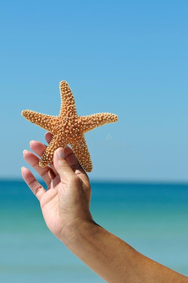 Starfish lizenzfreies stockbild