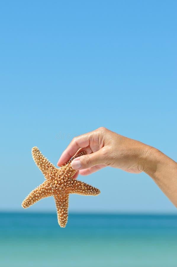 Starfish stockfotos
