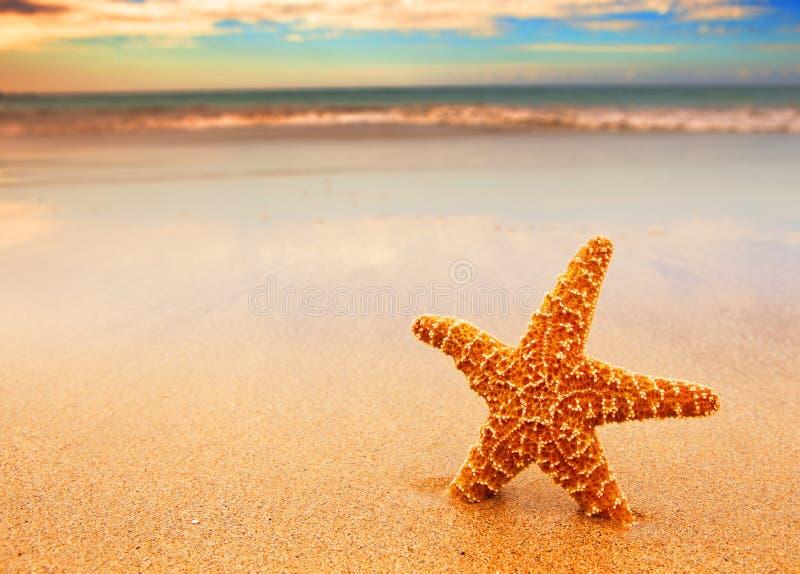 starfish стоковое фото rf