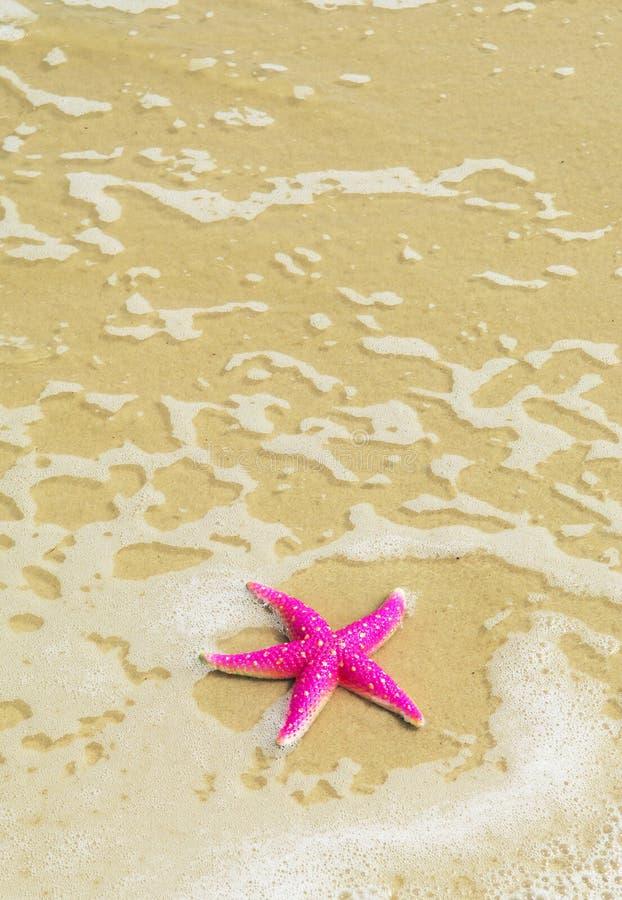 Free Starfish Royalty Free Stock Photo - 12896935