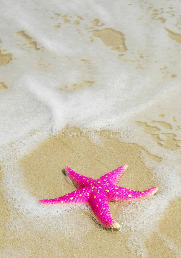 Free Starfish Royalty Free Stock Images - 12896959
