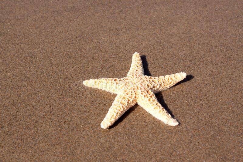 Download Starfish Royalty Free Stock Photos - Image: 13296638