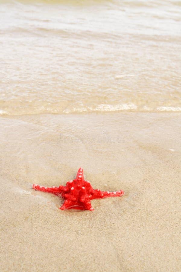 Download Starfish stock image. Image of sand, mollusk, water, coastline - 13994335