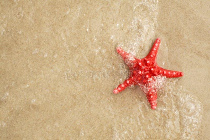Download Starfish stock image. Image of nature, shellfish, vacations - 13994353