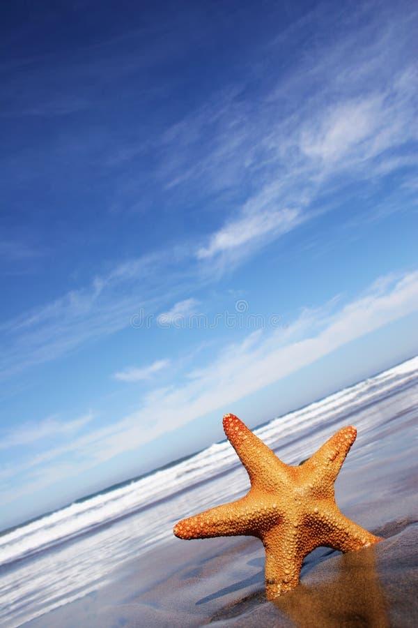 Download Starfish stock photo. Image of blue, ocean, animal, empty - 1405520