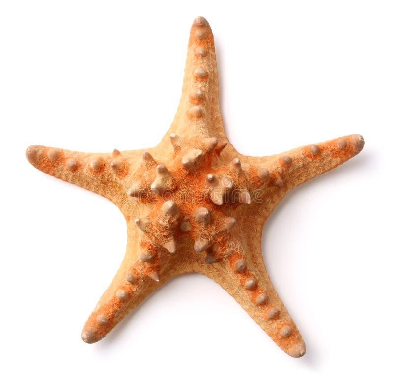 starfish стоковое фото