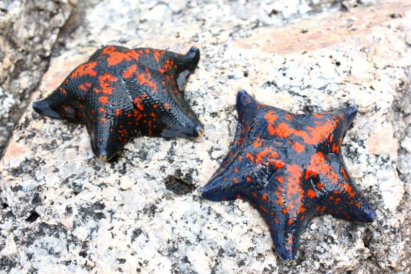 Download Starfish imagem de stock. Imagem de férias, costa, outdoor - 16861053