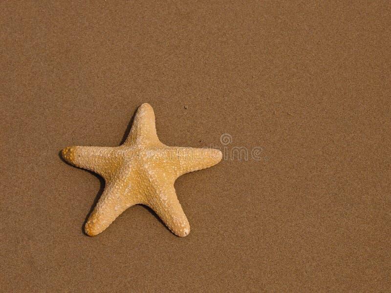 Download Starfish stock photo. Image of shell, five, marine, beach - 22836046