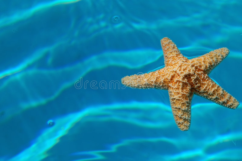 Download Starfish stock image. Image of decorative, summer, seasonal - 2491413