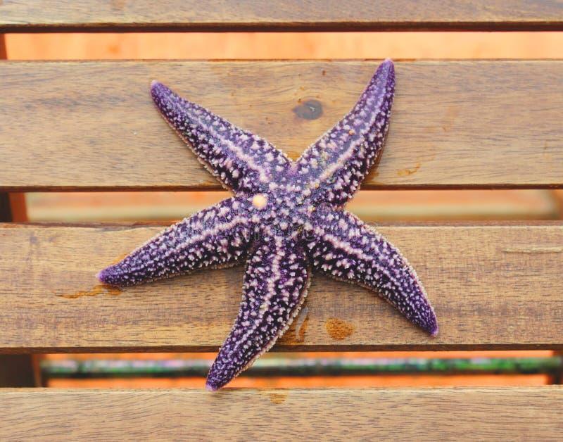 Download Starfish stockfoto. Bild von exotisch, frech, wasser - 26354308