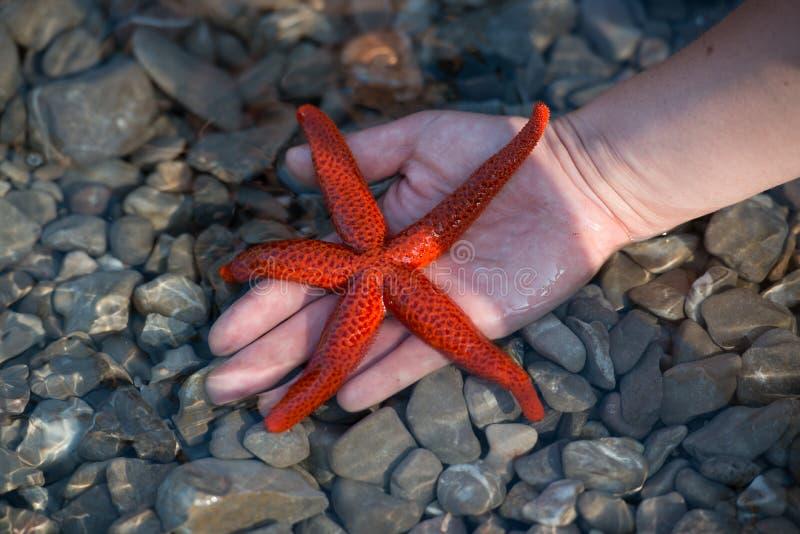 Download Starfish stock image. Image of predator, beach, star - 27257399