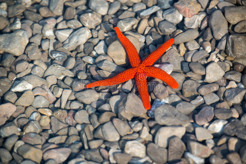Download Starfish stock image. Image of ocean, ecology, beach - 27257423