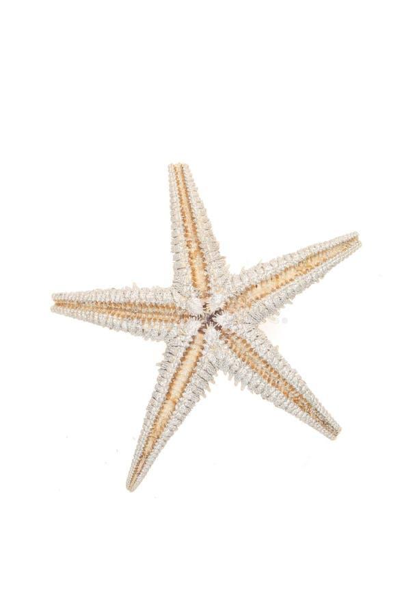 Free Starfish Royalty Free Stock Photos - 5240948