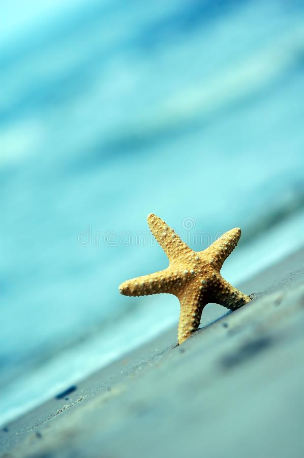 Starfish Kostenlose Stockbilder