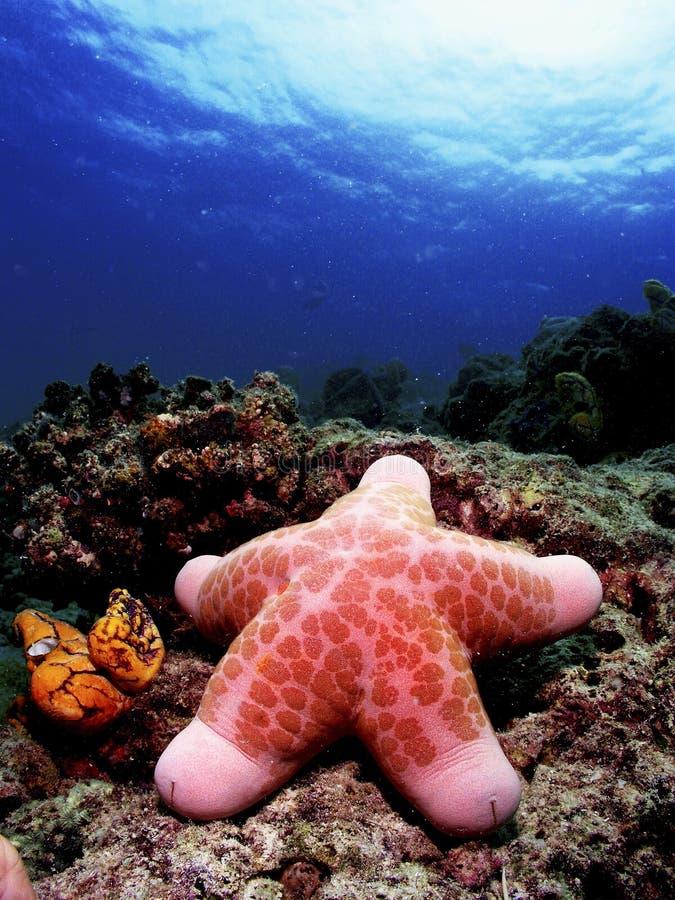 Free Starfish Stock Photo - 5619920