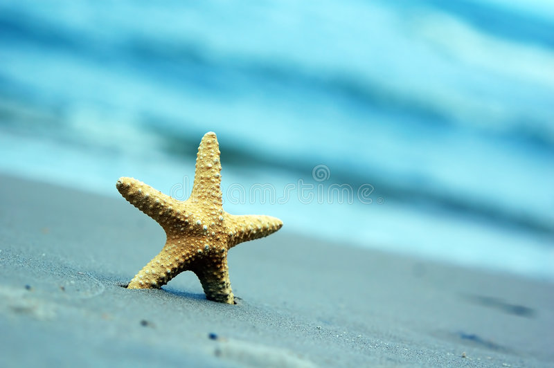 Starfish. On the tropical beach stock images
