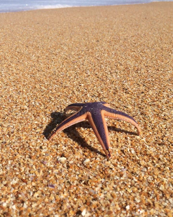 Download Starfish imagem de stock. Imagem de oceano, outdoors - 65576197