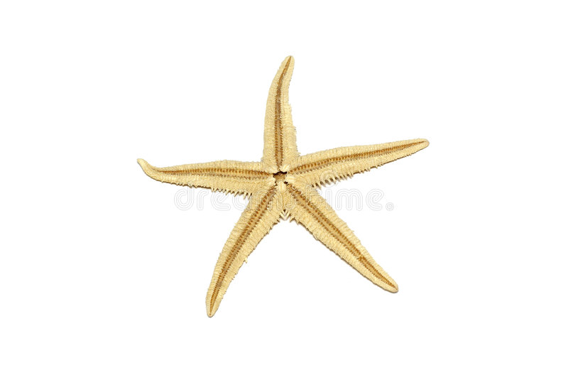 Starfish isolated on white background seastar star sea fish shell coral ocean marine creature seashell asterias dry rubens five stock image