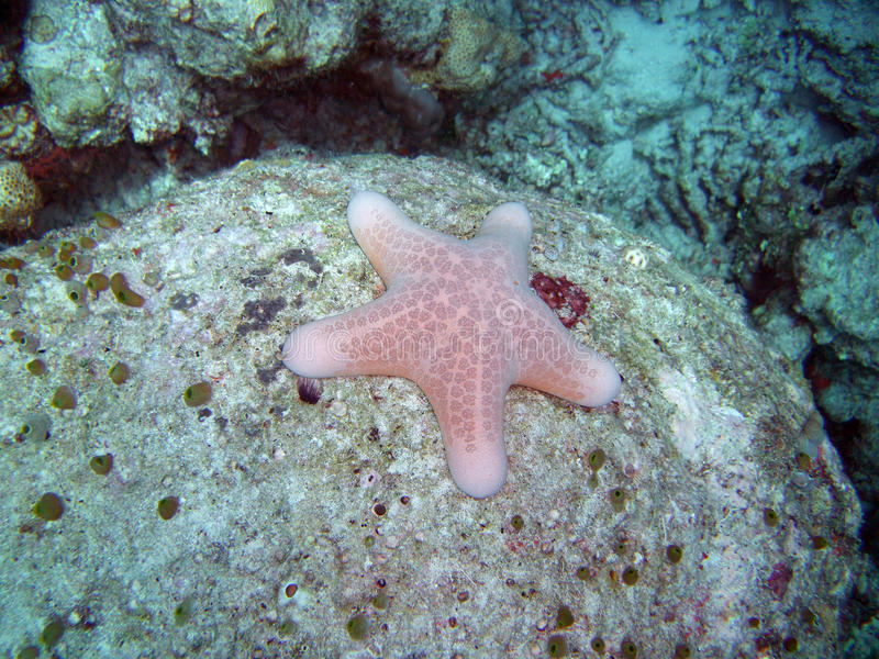 Download Starfish stock photo. Image of water, saltwater, tropical - 9736838