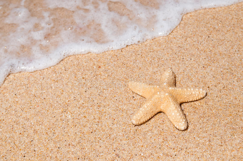 Download Starfish stock photo. Image of frothy, seaside, flow, smooth - 9829532
